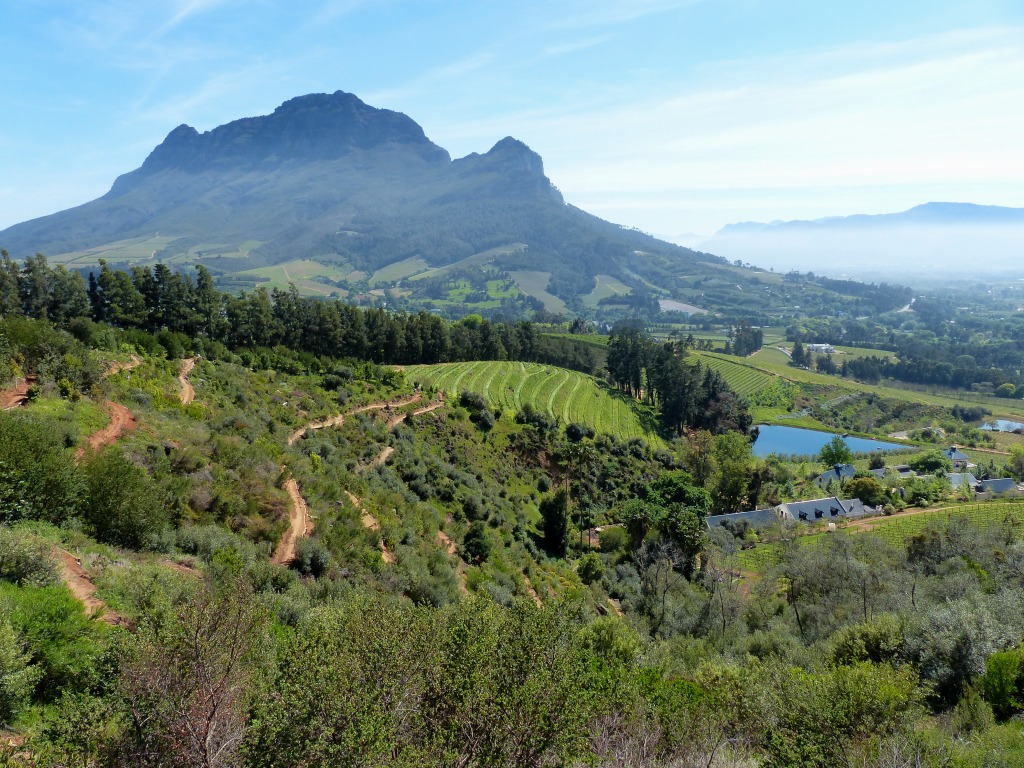 Mountain biking Cape Winelands